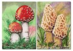 ACEO Mushrooms by Dusty-Feather
