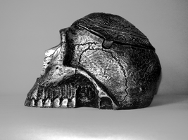 Skull Profile by thales-img
