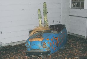 bumper car cacti by loufis