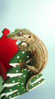 Yule Gecko by SunStateGalleries