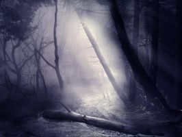 The Misty Woods STOCK by wyldraven