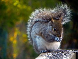 The prettiest squirrel by Lou-in-Canada