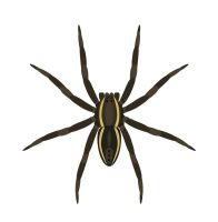Day 29: Raft Spider by ysyra