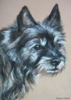 Old cairn terrier by Jniq