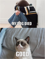 My Dog Died by DumbledoreIsAmazing