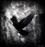 Ascension. by Phototubby