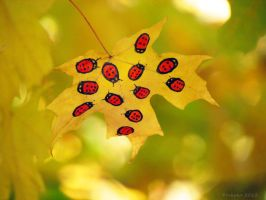 Ladybugs in the Golden Light by kaikaku