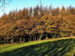 late autumn bands by nonyeB