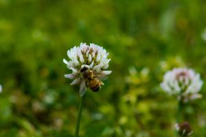 Beeing Beesy by numsi91