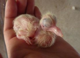 Mixbreed, Lash, 1 day old. by only-Freak-by-nature