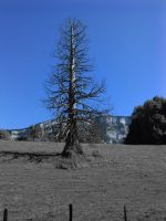 Dead tree II by Nicothelord