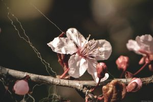 Tangled Blossoms by WickedOwl514