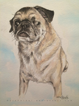 One-eyed Frank the Pug by OdieFarber