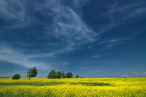 Ontario by somebody3121
