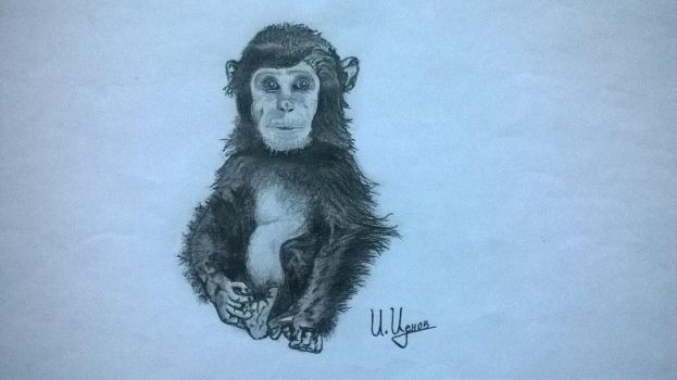 Monkey Sketchbook by Tsenov
