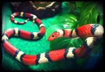 Nyasha, the Scarlet Kingsnake by Canlyn88