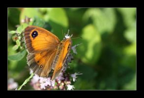 meadow brown 3 by 21711