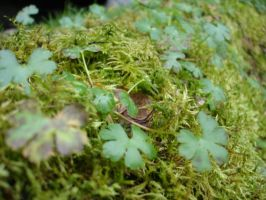 plants in ireland by csclements