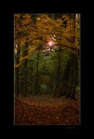 Passage to the sunlight by Lentekriebel