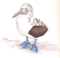 Blue Footed Boobie by BrowncoatFiction