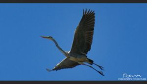 Reiger HDR by simoner