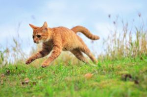 Jumping cat by MachPL