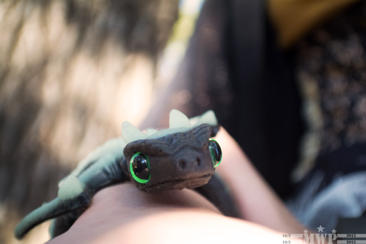 Toothless by WazoskiPhotography
