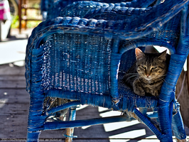 Comfy Kitty by TRE2Photo-n-Design