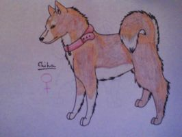 Chiha Husky Breedable by xXgetoutaliveXx