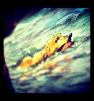 Sneak Peak - Golden Retriever summer swim by geralddedios