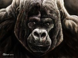 Mountain Silverback Godfather by Bisanti