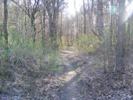 The woods I ride in 2 by beachtownkid