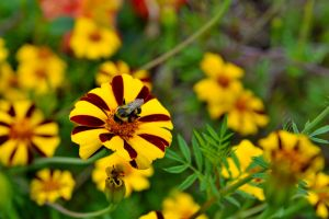 Bee on Hybrid Cosmos by lawout16