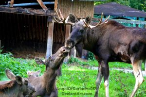 Moose Family - Kiss for Daddy by AngelOfDarkness089