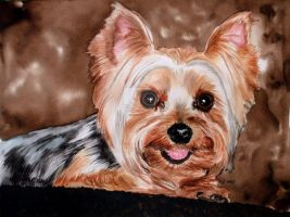 Happy Yorkshire Terrier by RamonaQ