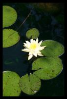 Lily Pad by KingsRansom