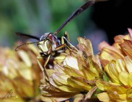Wasp 2009 by Gooiool