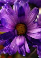 Birthday Flowers 5 by LifeThroughALens84