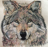 Wolf portrait by TiffMootrey