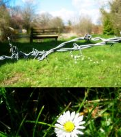 walking through barbed wire by the--end
