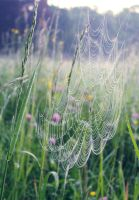 Spider's web by freshberries