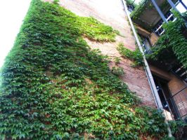 Ivy Building 3 by abuseofstock