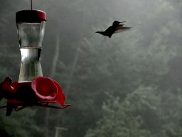 Humming Bird by artiseverywhere410