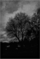 bare trees by rickster155