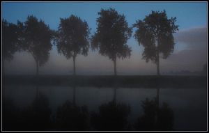 Mysterious morning trees by jchanders