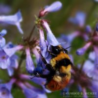 Wild Flower and Bee 2 by Kumiko-Art