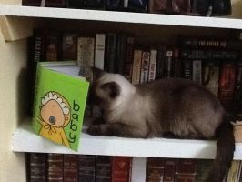 Siamese Cats Can Read by ikittywriter101