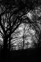 Haunted Tree by Caillean-Photography
