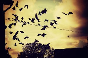 Black Birds by llllollll
