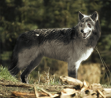 Real Mightyena?